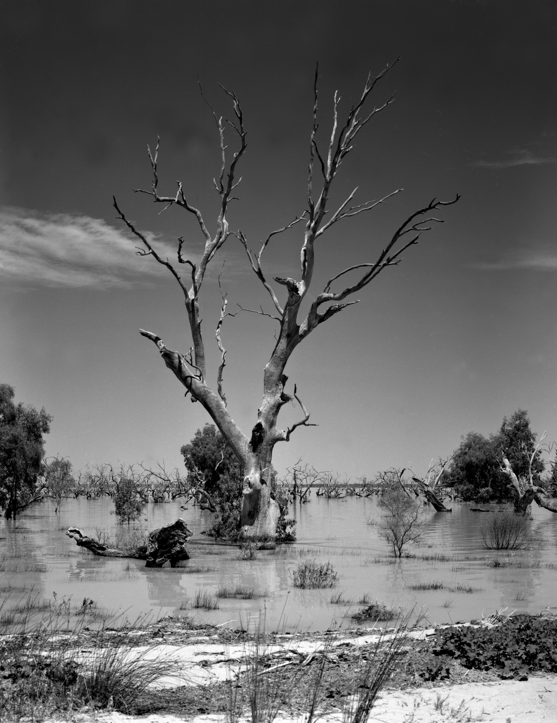 4x5_Lake_Cawndilla_Kinchega_NP_2011_002_Finished_150_Polariser_FP4_22mm_Rise_Drowned_Tree_web.jpg