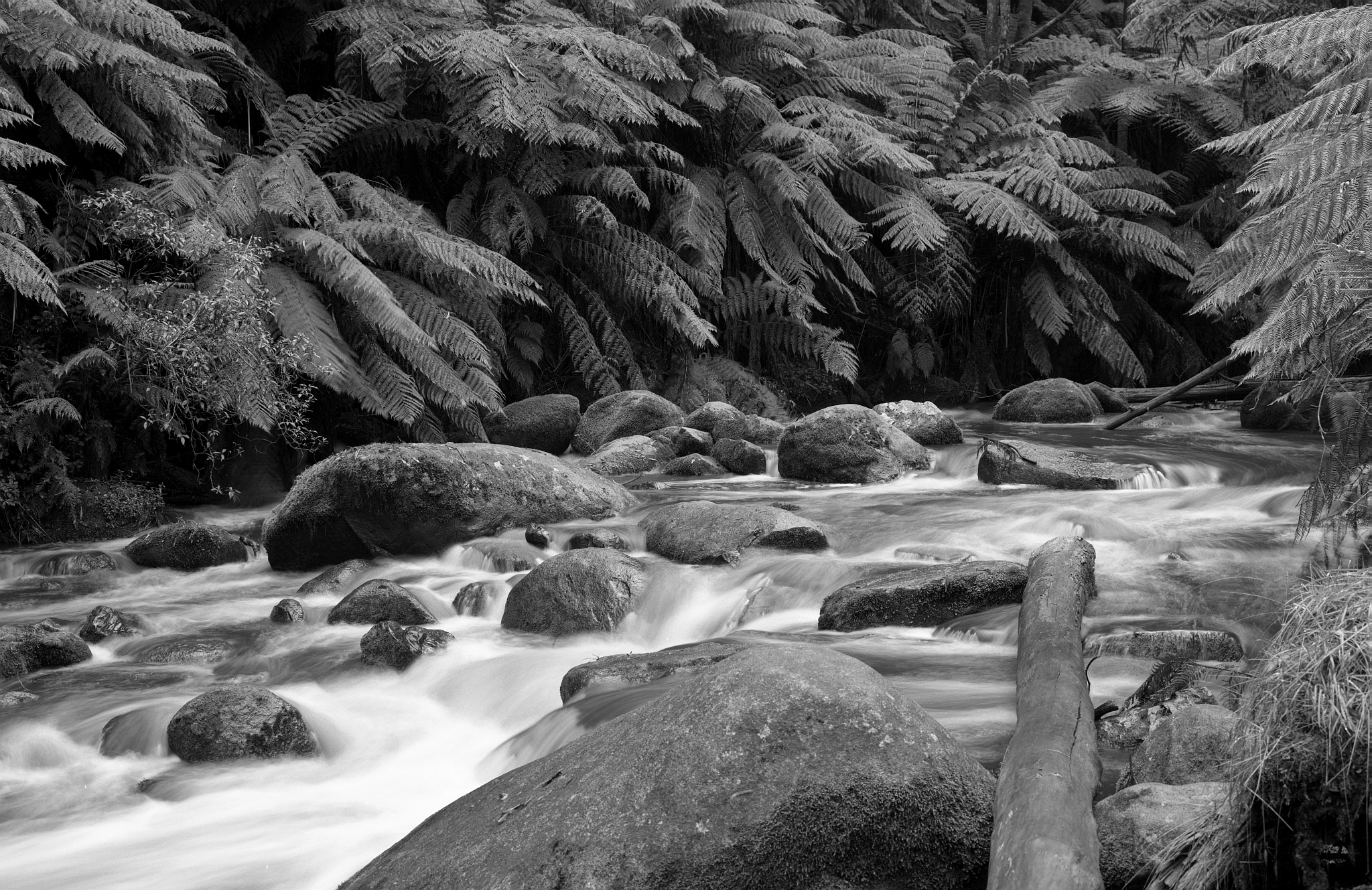 120007_Tooronga_River_FP4_150_8mm_shift_2_Second_f22_008_web.jpg