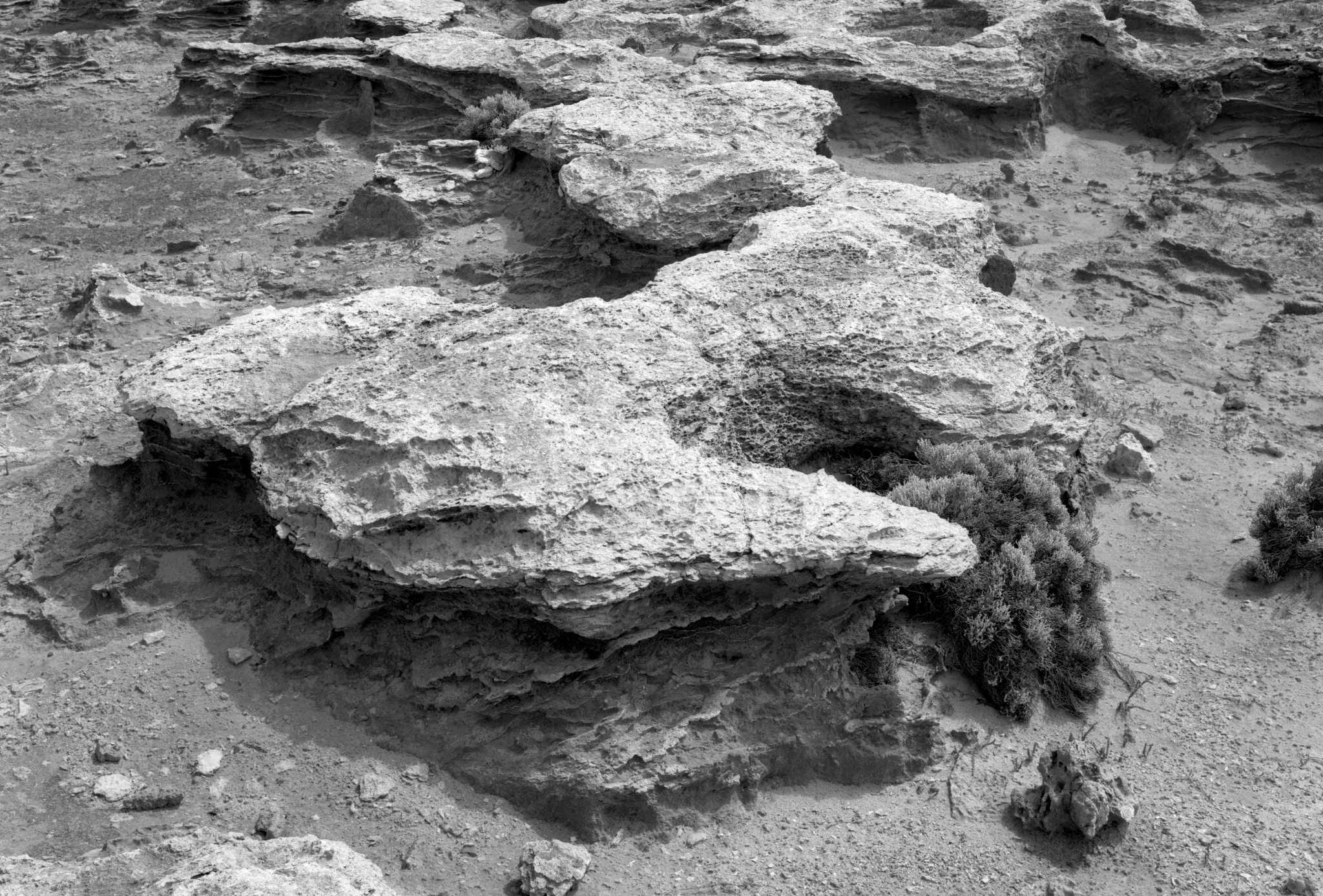 180011_Petrified_Forest_Portland_150_Ilford_FP4+_No_Filter_F22_1-30_Rear_Tilt_007_Web.jpg
